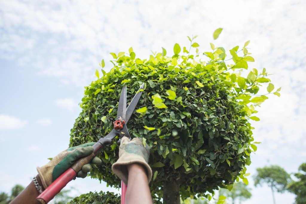 gardener pruning a plant using shears