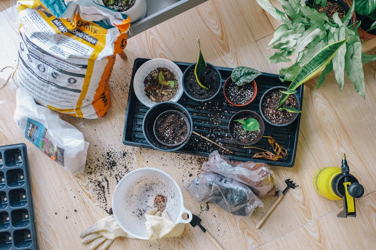 potting new plants